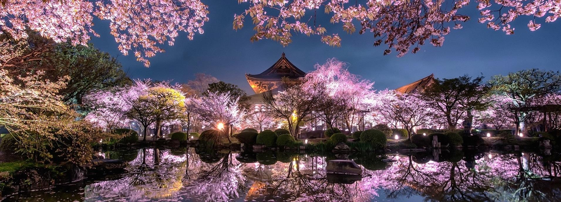 Bajo los cerezos en flor…